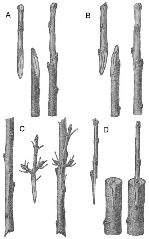 tree_graft